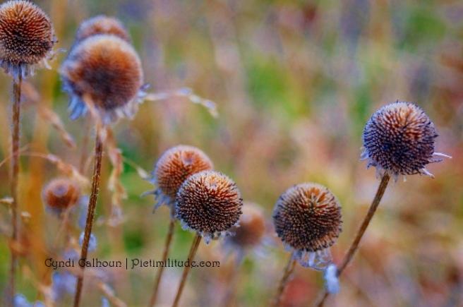 Fall harvest balls