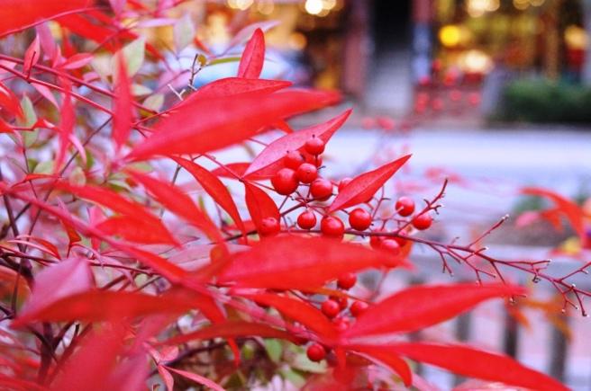 Full Color Christmas Berries