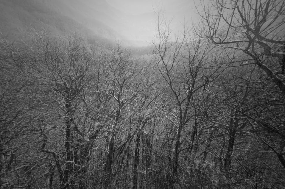 Appalachian Trail trees with filter