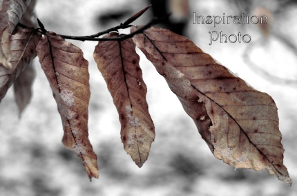 winter leaves inspirations