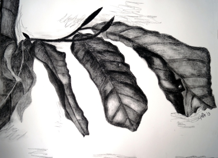 winter leaves charcoal drawing