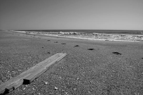 cape hatteras beach wood