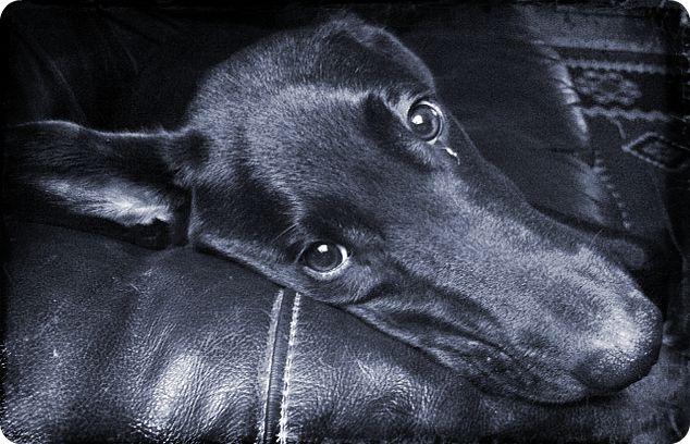 Vinny the dog