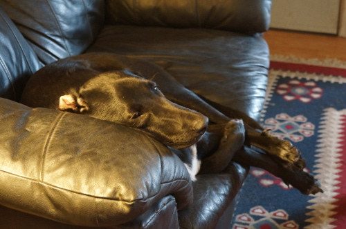 vinny plott hound