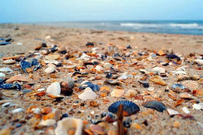 seashells outer banks